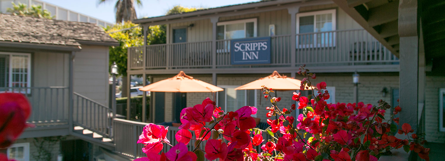 Red flowers with Scripps Inn Sign on the building - sunny day La Jolla Cove CA