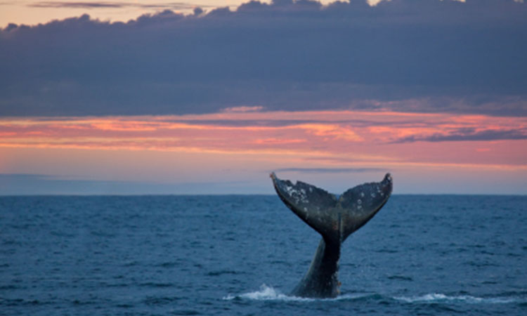 whalewatchingimage1